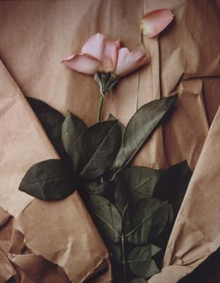 rose-and-torn-paper